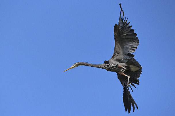 Heron – bottom view