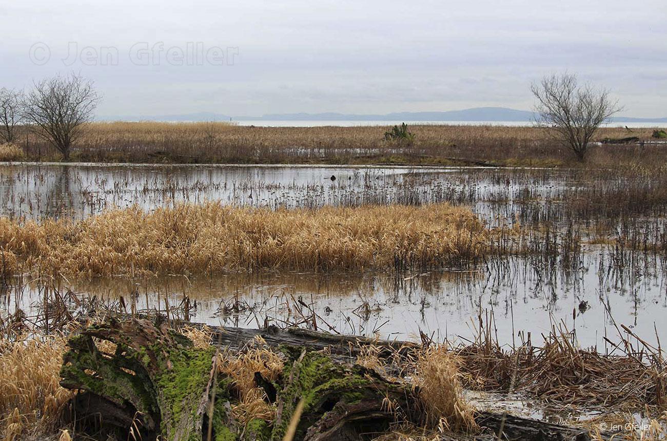 Delta Marsh at King Tide