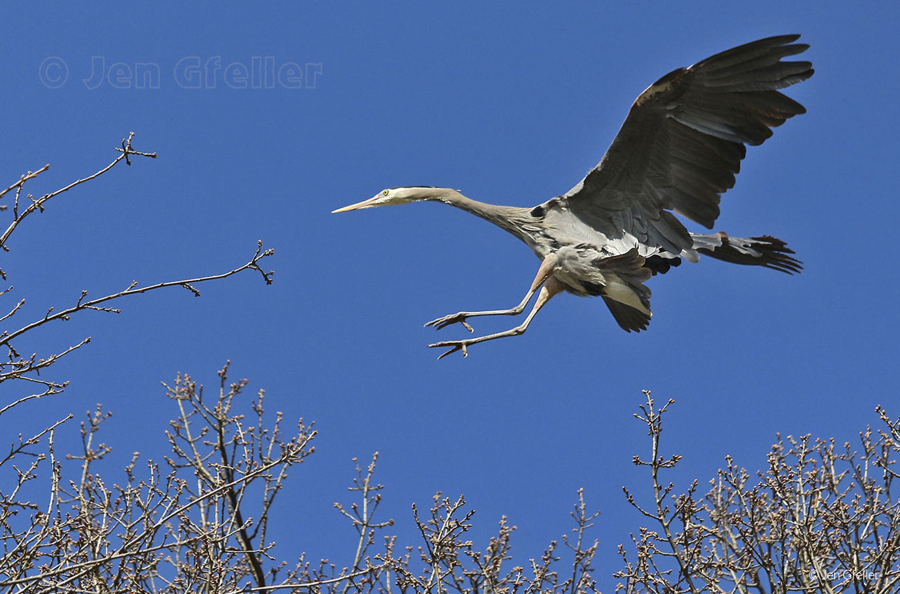 Heron landing approach